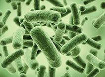 Probiotischer Komplex