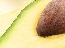 Avocado- und Birkenrindenextrakte